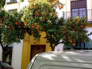апельсиновые деревья, Севилья