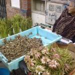 севильянка торгующая зеленью и улитками