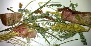 смесь трав для помандера как сделать самому помандер